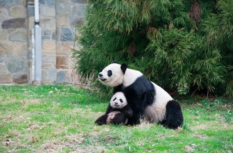 bao bao national