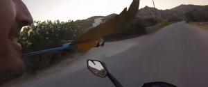 Parrot Macaw Motorbike Race