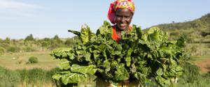 Africa Kale