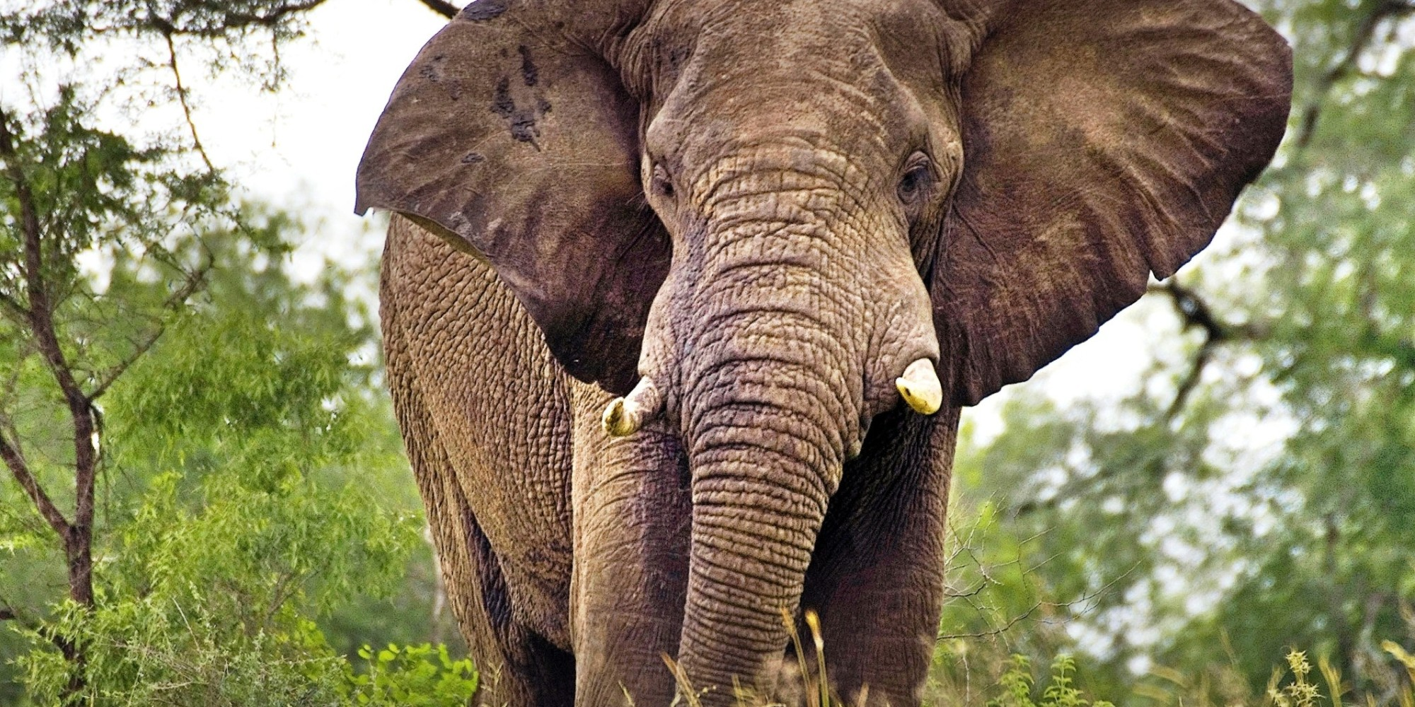 divorce in year of the elephant They are either widowed, divorced, or single-never-married  big elephant   mid atlantic cohousing is sponsoring a year long aging in.