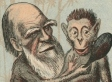 How Evolution Gets Used and Abused in the Science-Religion Debate