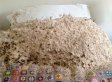 GIANT Wasps' Nest Discovered On Woman's Guest Bed