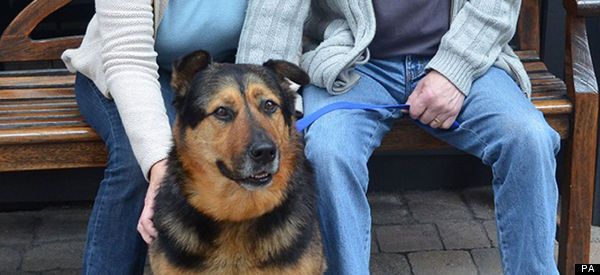 'Sad-Looking' Stray Dog Bless Finally Finds A Happy Home