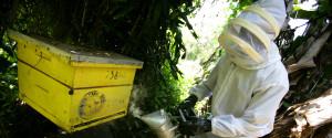 African Beekeeper