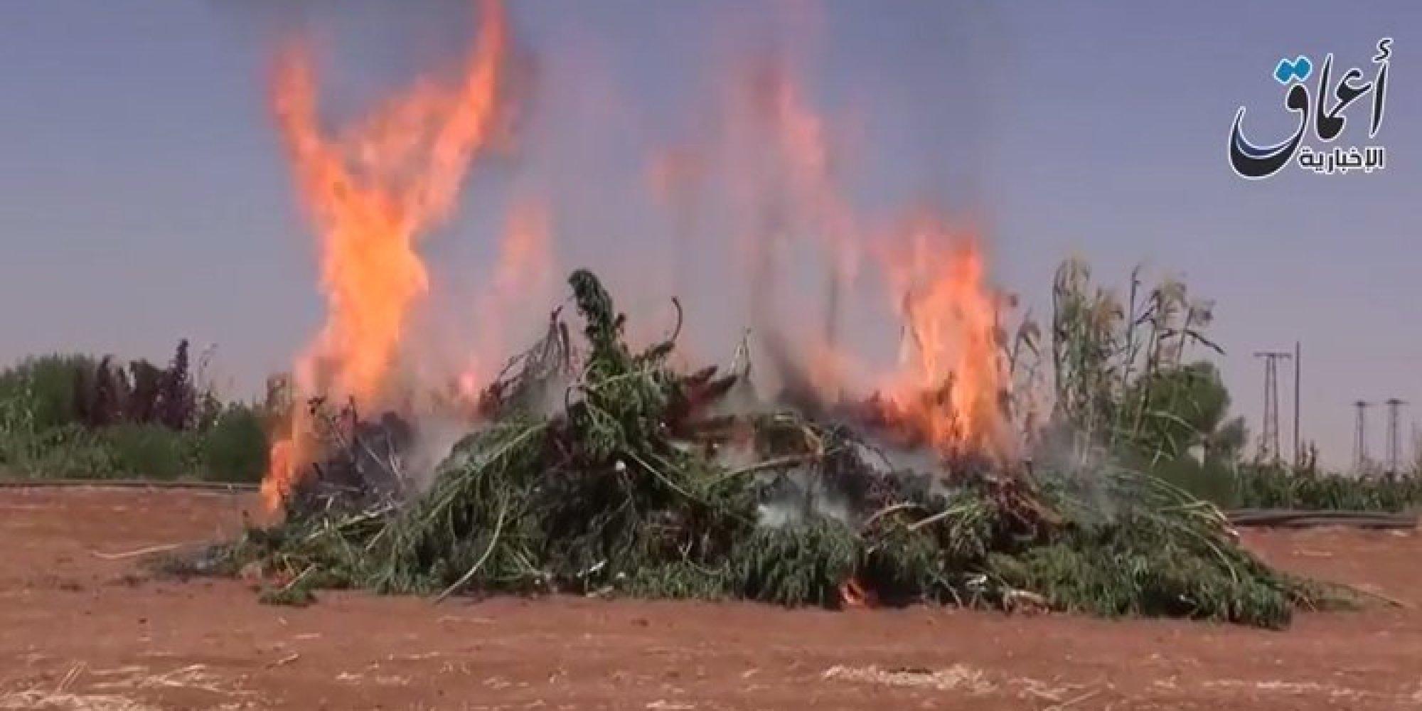 ISIS Says It's Burning Marijuana Fields In Syria