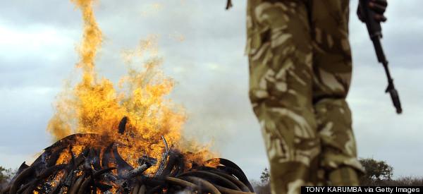 Corrupt Kenyan Rangers Murdered Poachers, Report Alleges