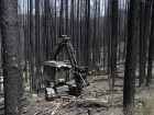 Plan To Harvest Trees Scorched By California Rim Fire Called 'Ecological Travesty'