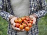 How Tomatoes Could Reduce Risk Of Prostate Cancer