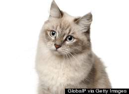 Russian Bank Gives Away A Free Cat With Every Mortgage (Dog Lovers Need Not Apply)
