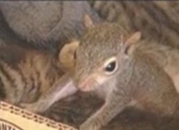Cat Adopts Squirrel