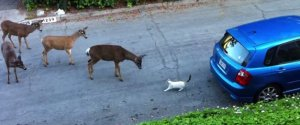 Cat Deer Meet