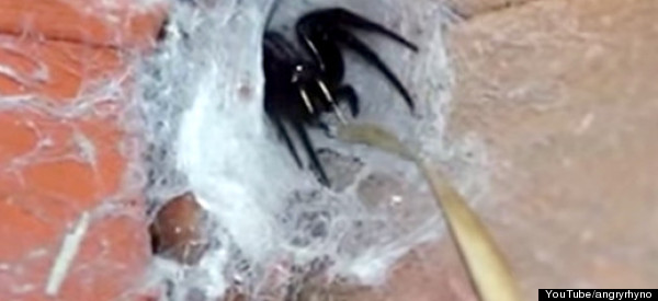 Warning: This Video May Induce Arachnophobia