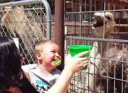 Baby Finds Ostrich Enormously Hilarious