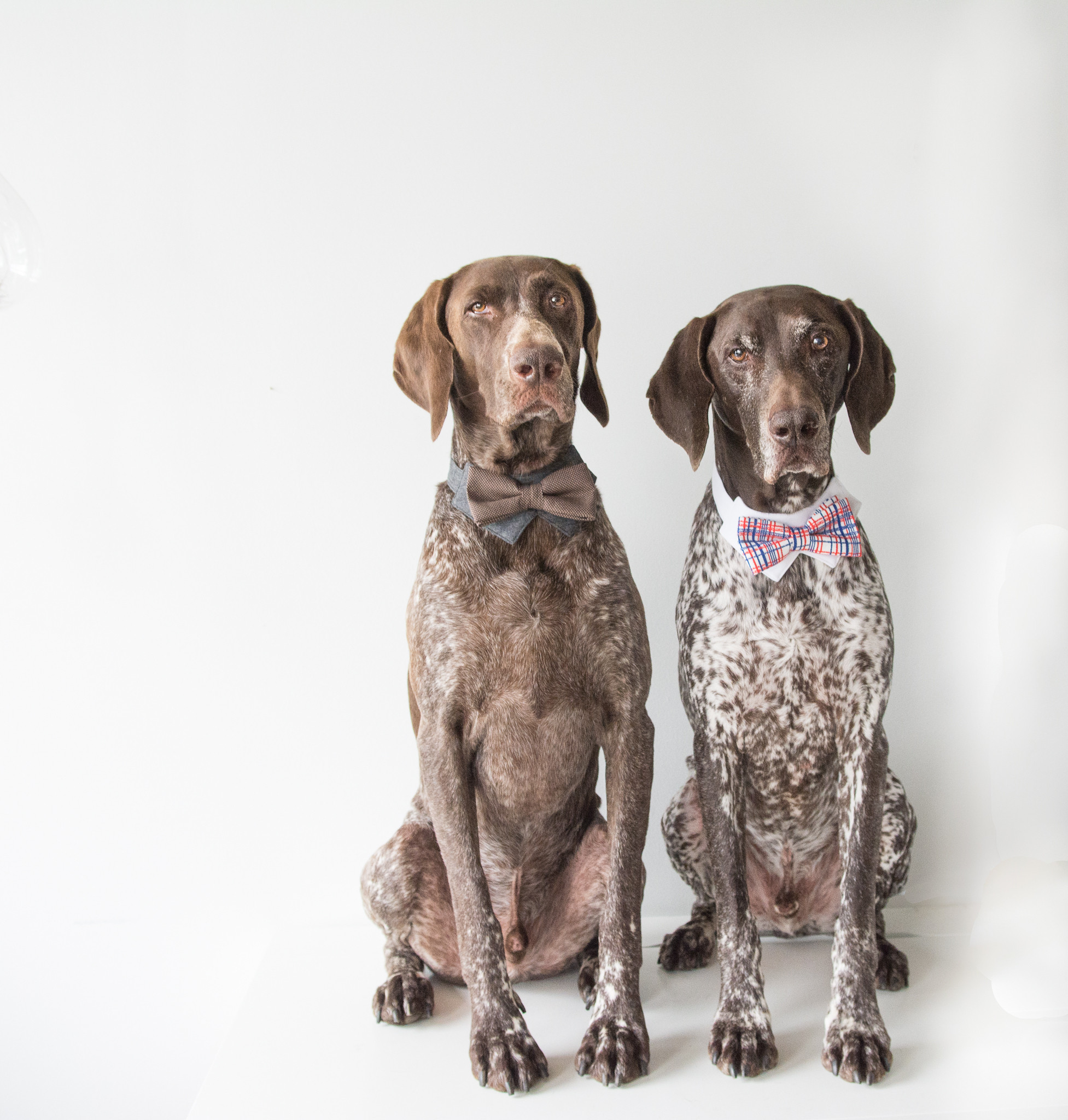 dapper dogs