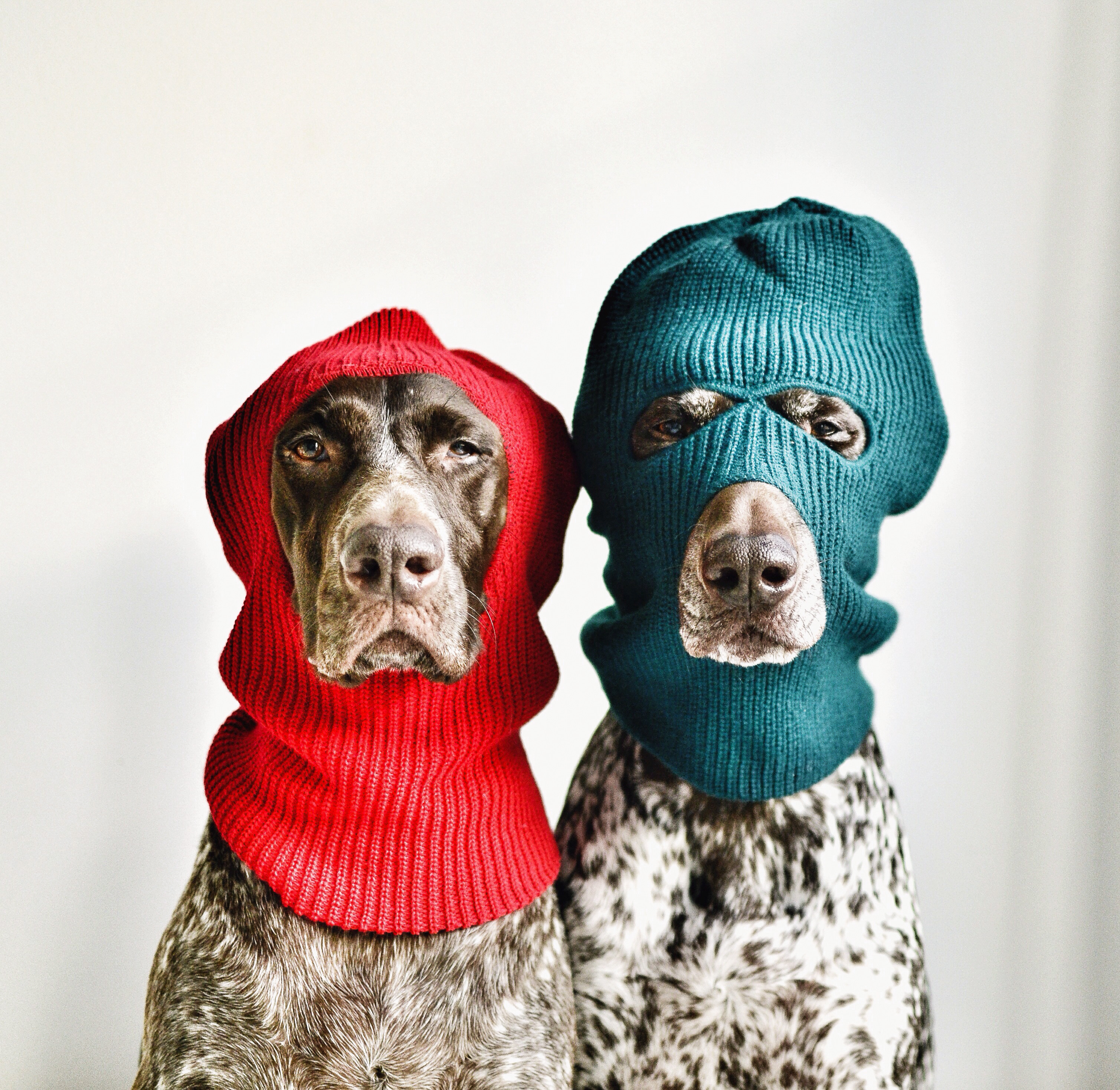ski mask dogs