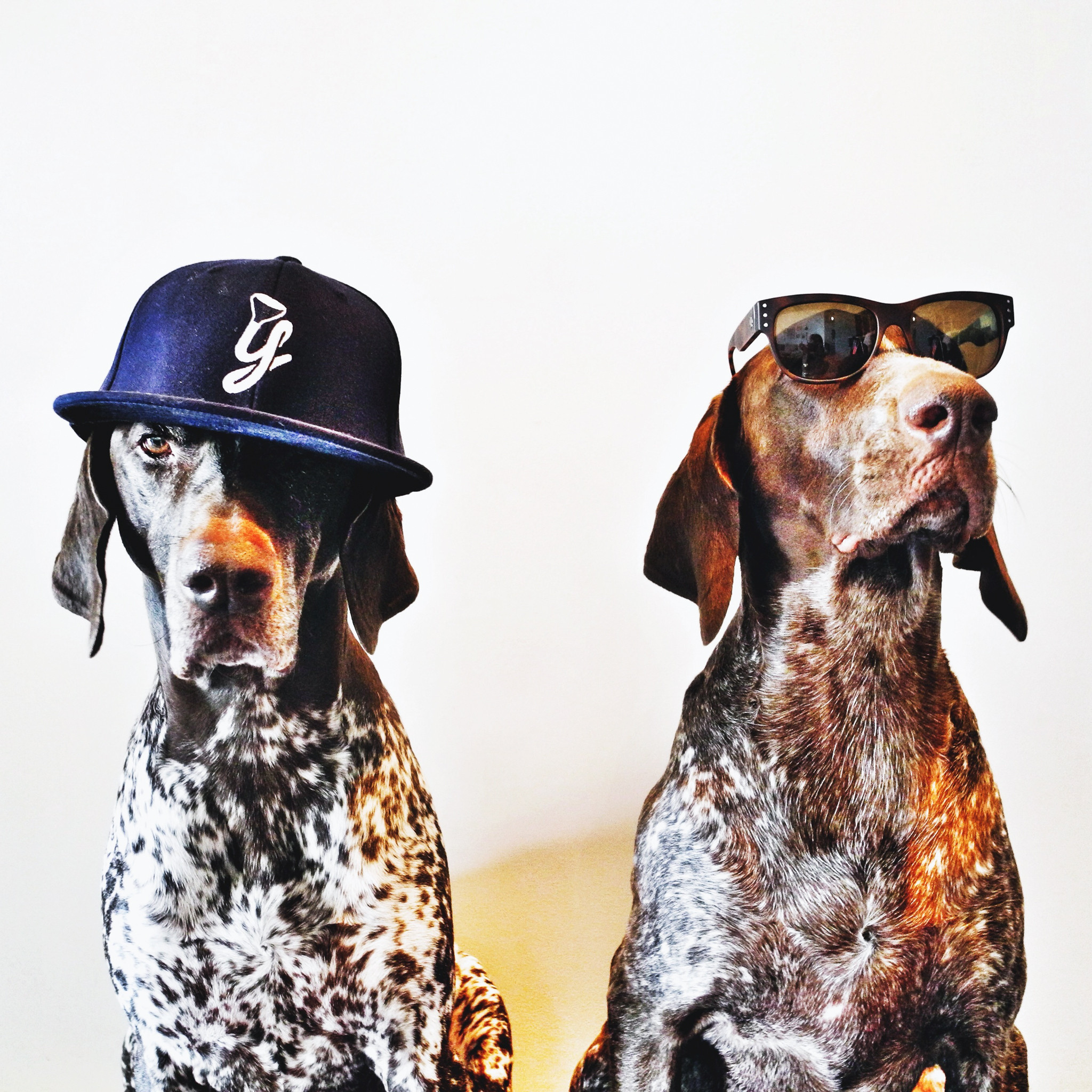 hat sunglasses pointers