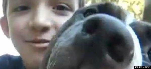 This Pit Bull's Owner Was Attacked By Bees. She Saved Him. Good Girl, Hades!