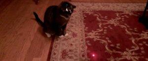 Cat Laser Pointer Head