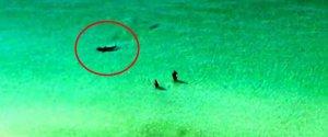 Hammerhead Shark Beach Florida Destin