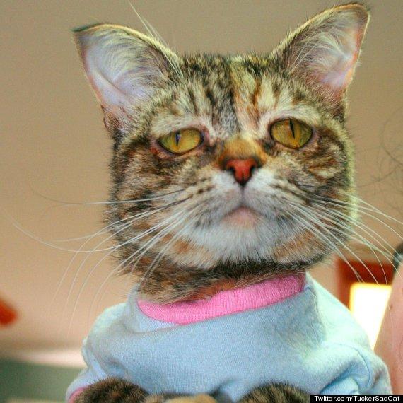tucker sad cat