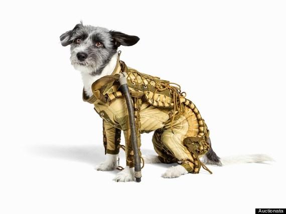 dog spacesuit