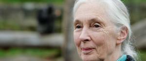 Jane Goodall Video