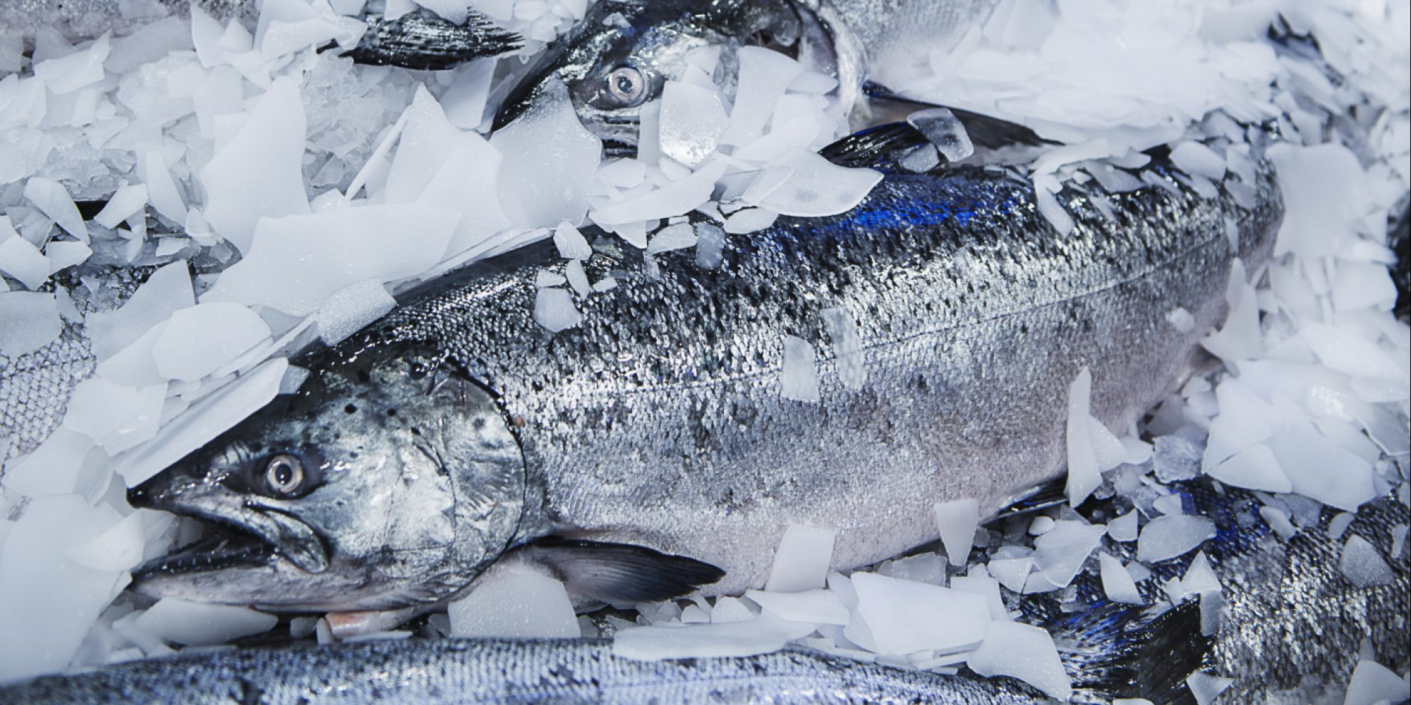 How to get more fresh fish in your diet huffpost uk for Fresh fish company