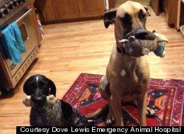 Dog Survives After Eating 43.5 Socks