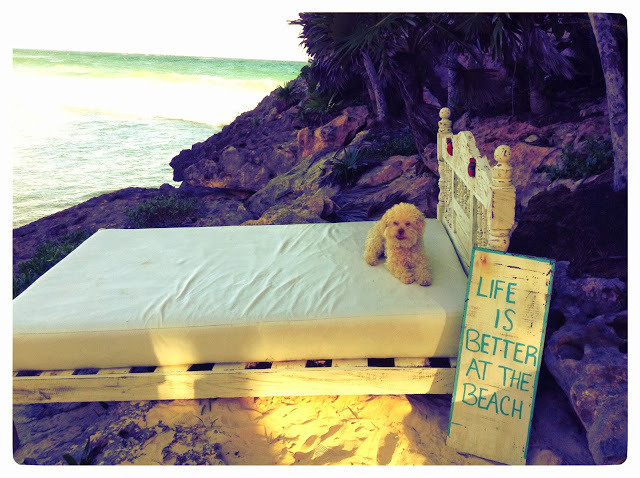cerbero on beach
