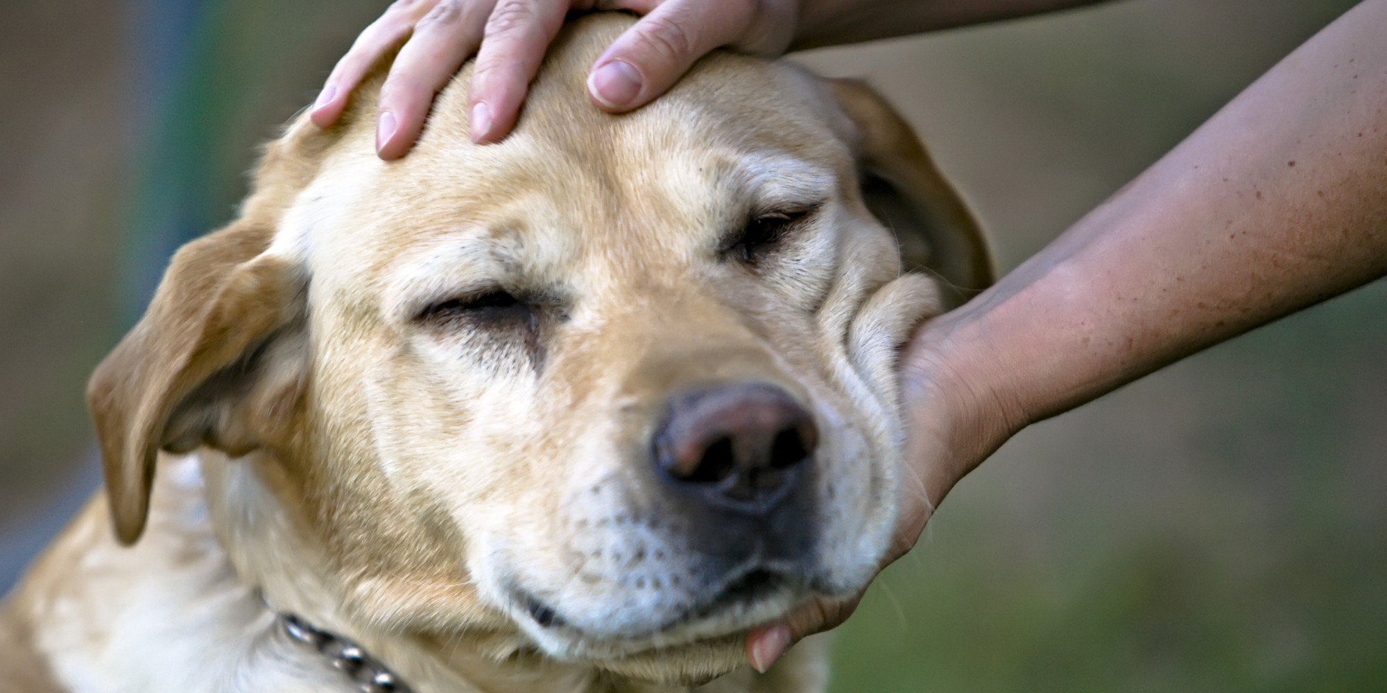 dogs prefer petting way more than you thought
