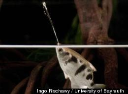 WATCH: Fish Turns Sniper To Snag Distant Prey