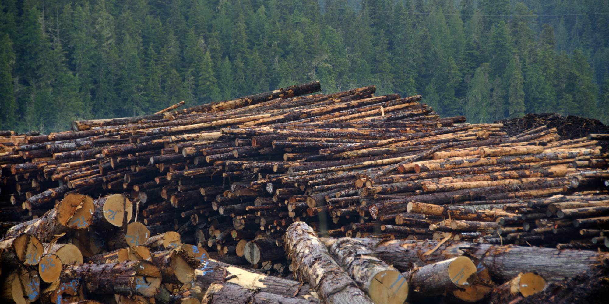 Canada Largest Contributor To Deforestation Worldwide Study