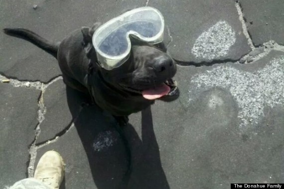 bomb sniffing dog