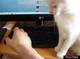 The Ultimate Compilation Of Cats Bullying People