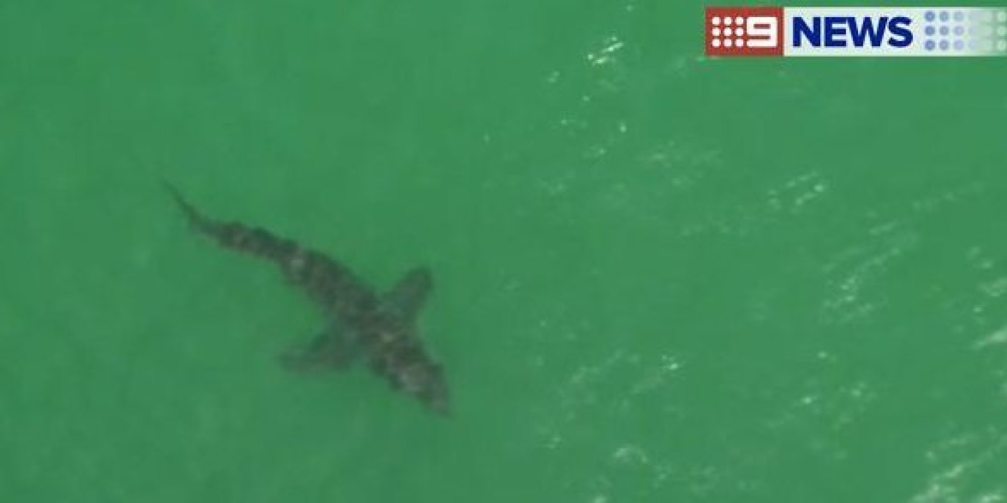 shark attack byron bay - photo #29