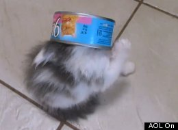 WATCH: Kitten Refuses To Waste One Drop Of Food