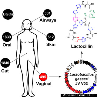 lactocillin