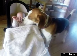 All These Dogs Want To Do Is Tuck Their Baby Best Friends Into Bed