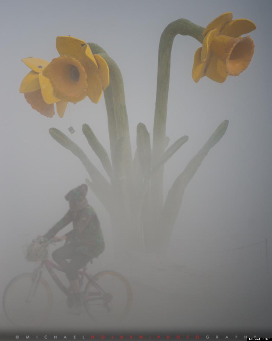daffodil dust