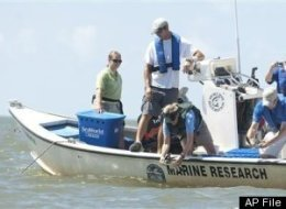 Gulf Scientists
