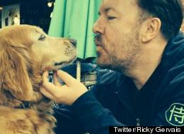 Stars Campaign To Help Manchester Dogs Home