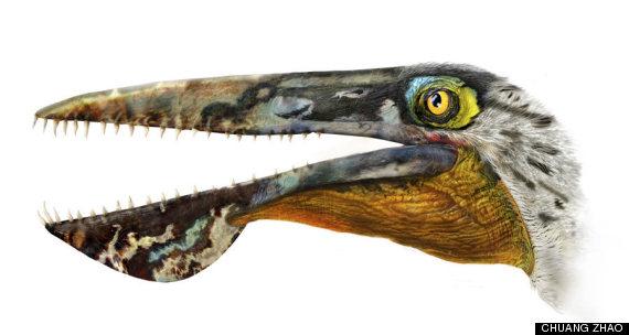 pterosaur head