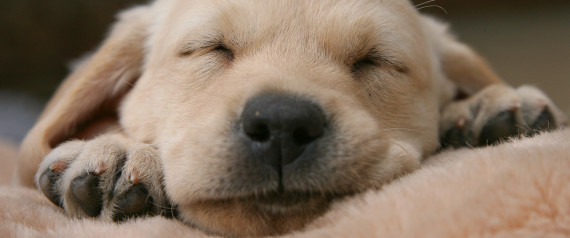 BEST SLEEP QUOTES