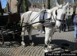 Horsedrawn Carriages