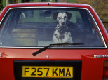 Why You Should Never Leave Your Dog In A Car