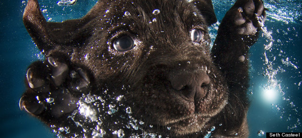 This Photographer Taught 1,500 Puppies To Swim. These Are The Adorable Results.