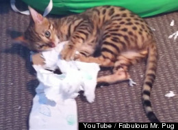 When Cats Take On Toilet Paper, Everyone Wins
