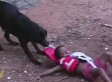 Rescue Dog Ruins Fun Time By Saving Kid Who Doesn't Need Saving