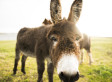 Missing Driver Says He Woke Up In A Field Of Donkeys