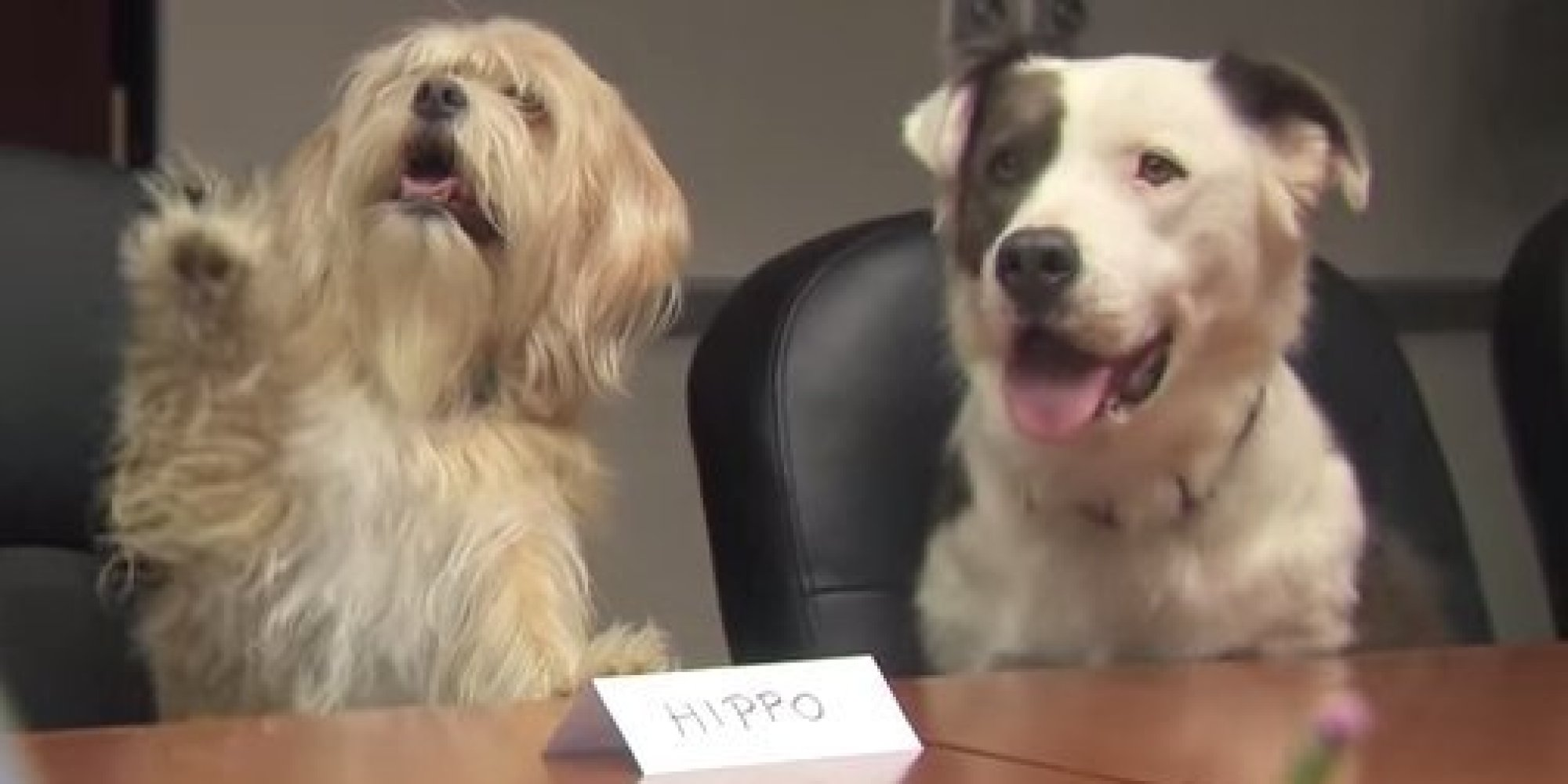 Hilarious Focus Group Asks Pups To Rate Products And They